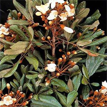 HerbalIngredients of Health LLC EnhanceRx Male Enhancement
