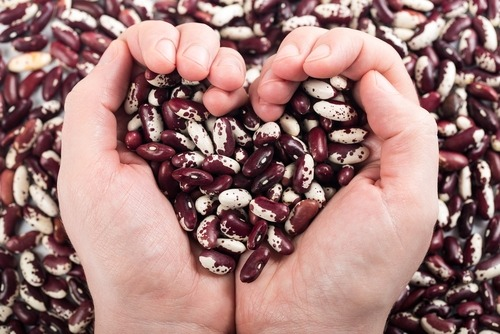 hands full of kidney beans