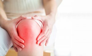 knee inflammation can be improved with Tribulus terrestris